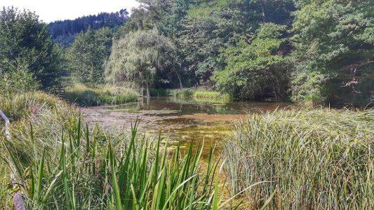 Sommerwald – ein paar Impressionen