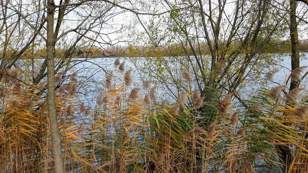 Novemberweg – Gedanken zur zweiten Strophe