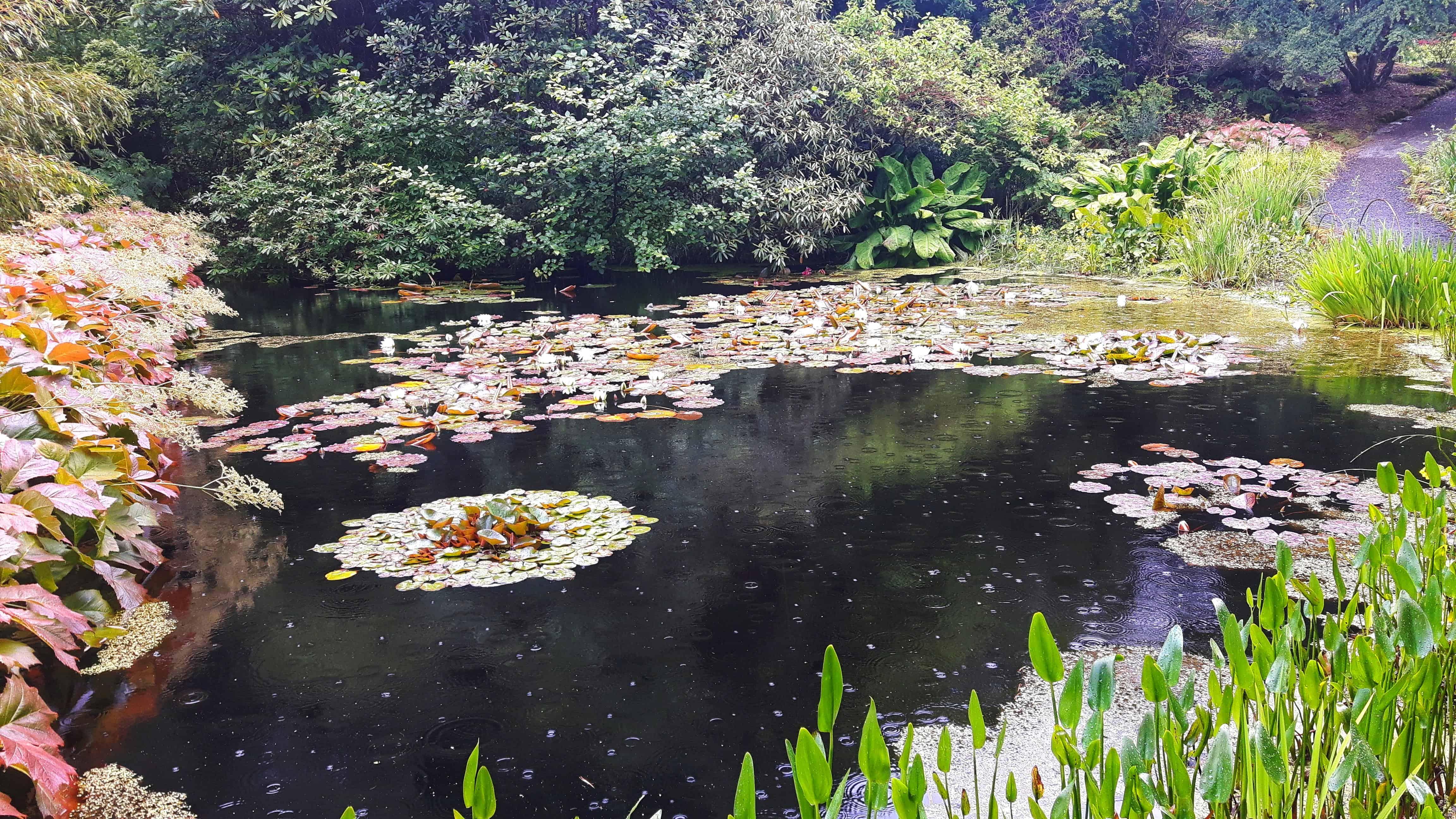 Septemberwaldherbstmorgen – die zweite Strophe