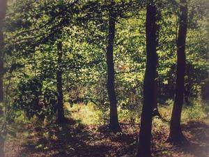 Septemberwaldherbstmorgen - Sehen