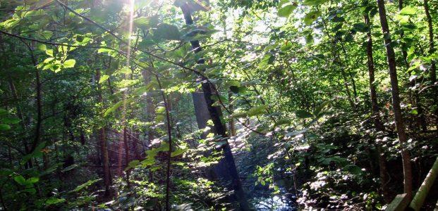 Septemberwaldherbstmorgen – die erste Strophe