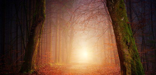 Septemberwaldherbstmorgen – die dritte Strophe