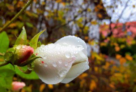 Septemberwaldherbstmorgen – die letzte Strophe