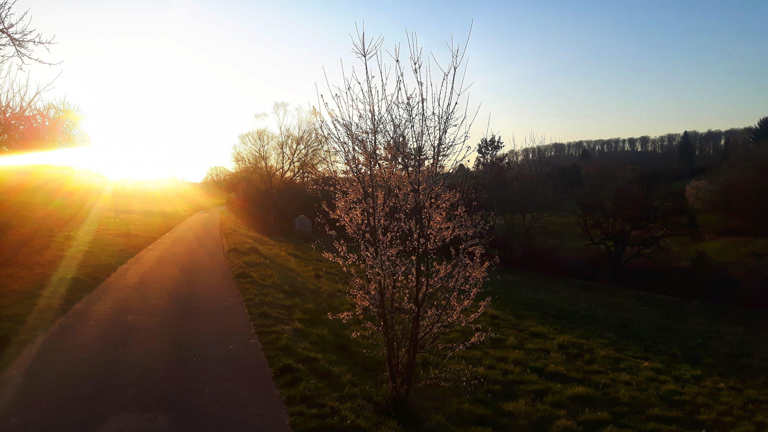 Frühlingslicht und viele Gedanken