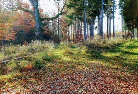 Waldsinger – ein neues Projekt