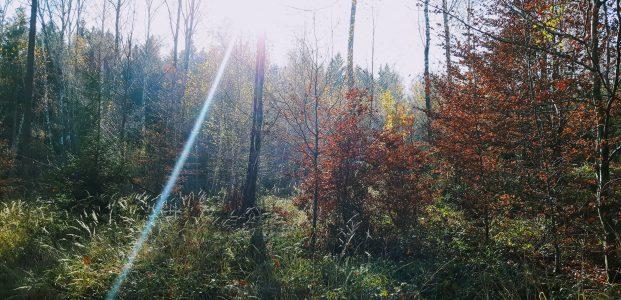 Waldsinger – hier ist die zweite Strophe