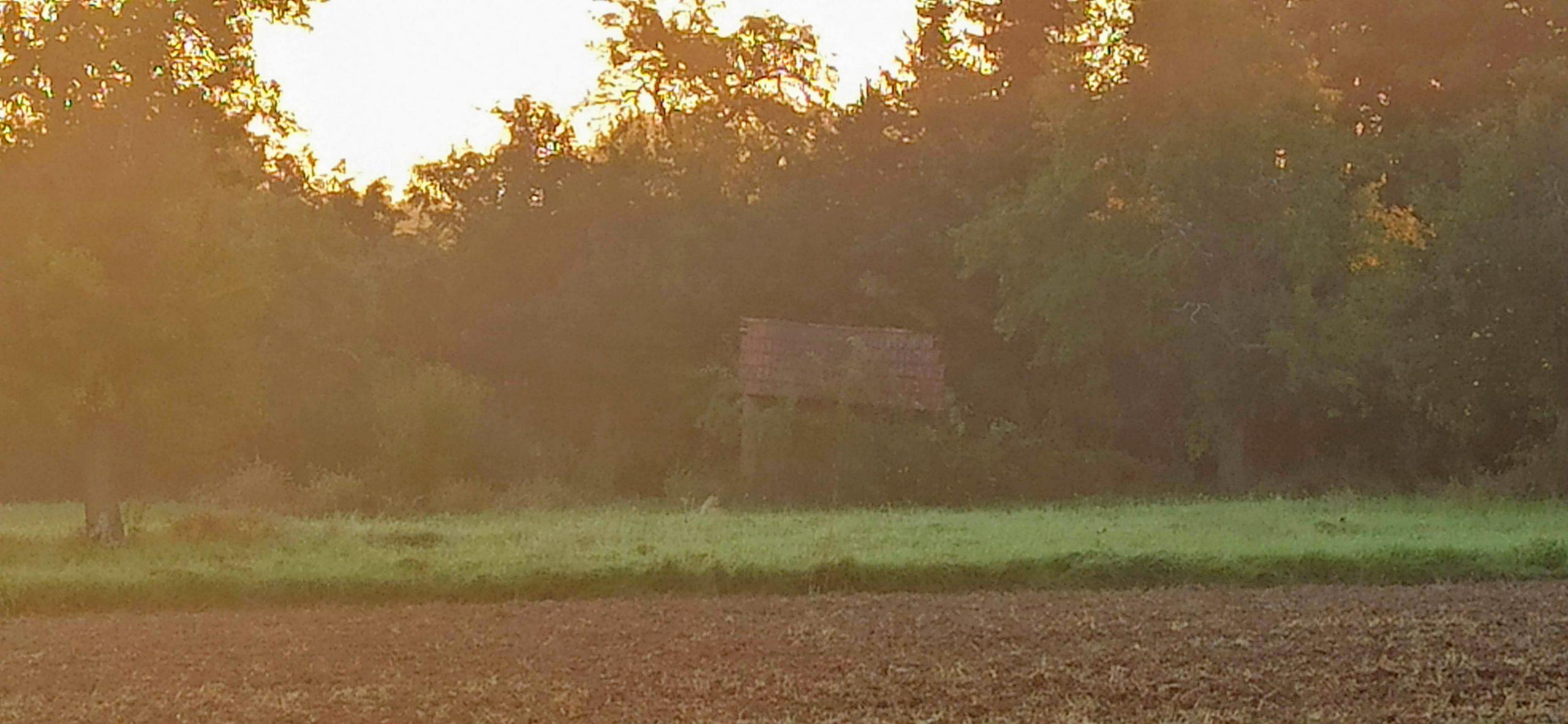Zwölftel Blick – September